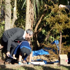 Planting commemorative totara